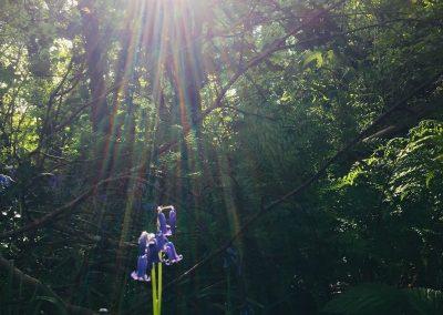 Bluebells | Hudnalls Woods | The Hudnalls Hideout Treehouse Wye Valley