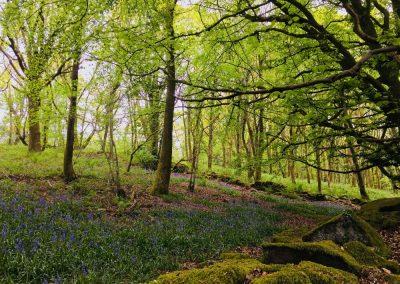 Bluebells Hudnalls Woods | The Hudnalls Hideout Treehouse Wye Valley