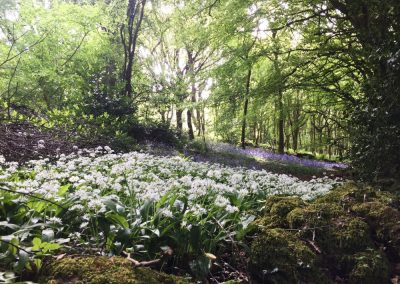 Bluebells and Wild Garlic | The Hudnalls Hideout Treehouse Wye Valley